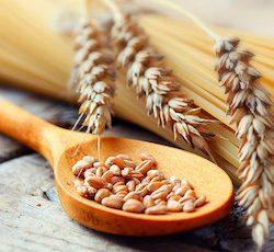 Pšenica sa používa do chlebu